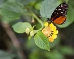 101|365 Beautiful butterfly